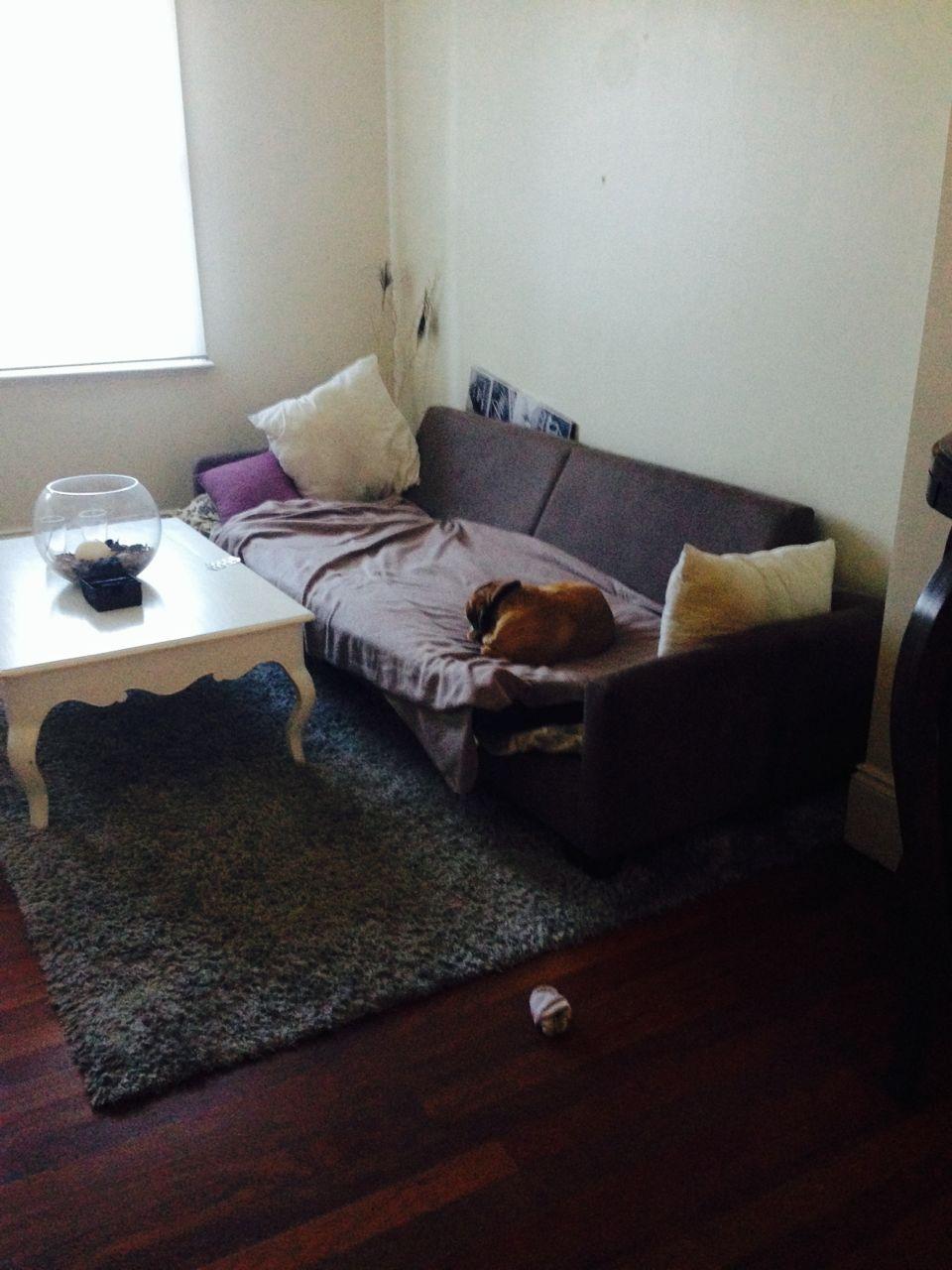 Tolle - halbe - Couch mit Hund und Hundehaaren